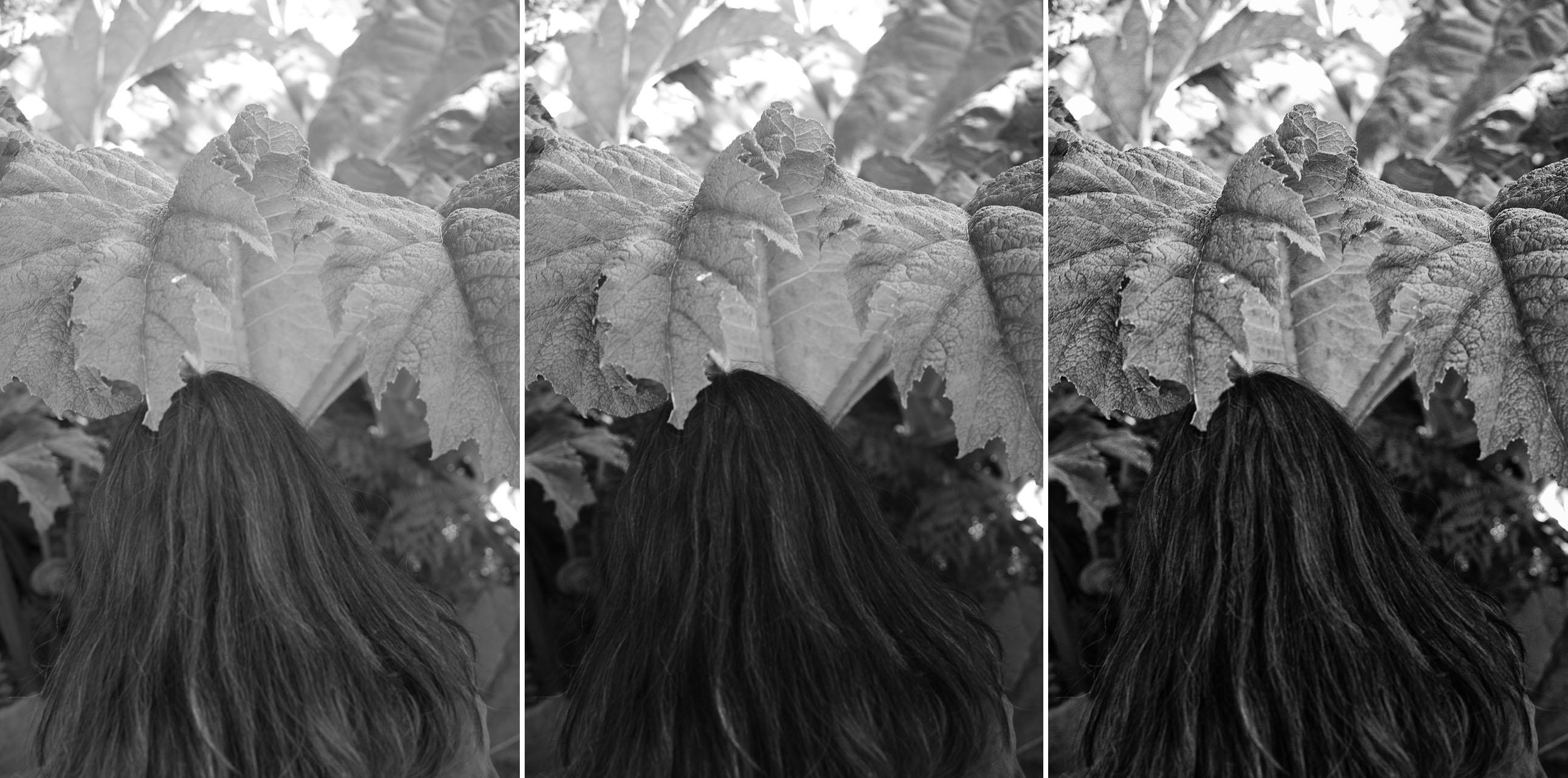 Contrast Curves for Leica Monochrom